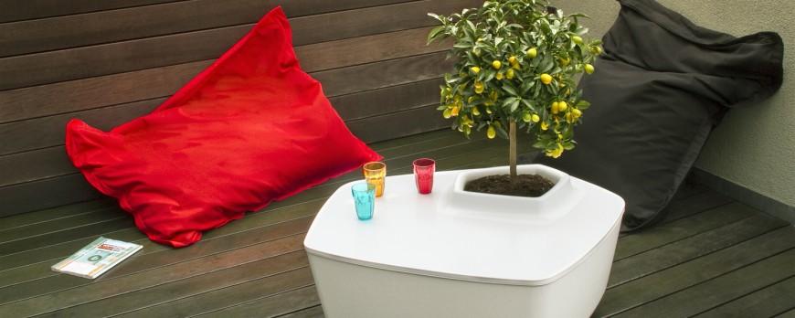 Silence ça pousse : zoom sur nos plantes préférées !
